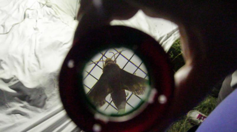 Saint-Julien le Montagnier regarde voler les papillons de nuit