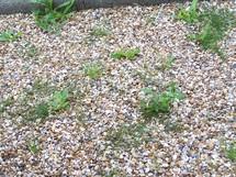 mes astuces pour liminer les mauvaises herbes du jardin. Black Bedroom Furniture Sets. Home Design Ideas