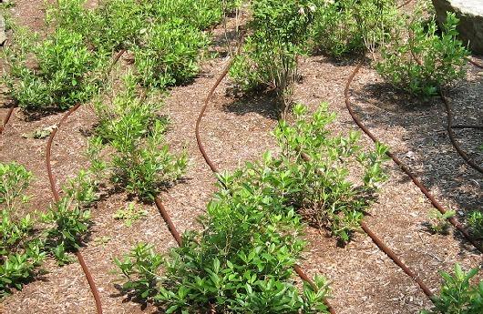 irrigation micro irrigation s n gal. Black Bedroom Furniture Sets. Home Design Ideas