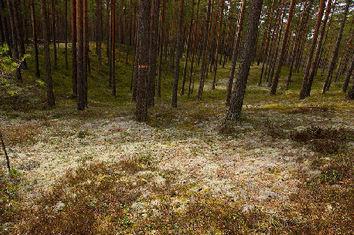 EOC en Suède - C'est parti !
