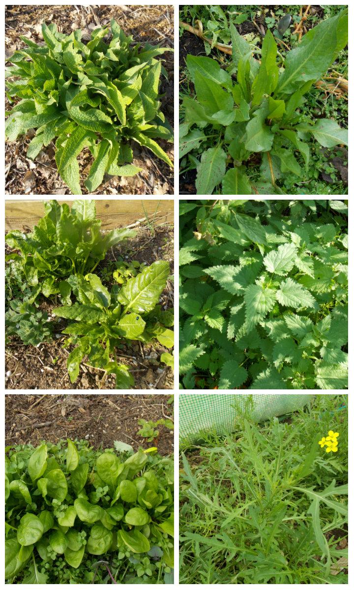 La Chlorophylle, un concentré de bienfaits !