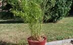 Le bambou a tous les atouts !