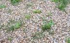 Mes astuces pour éliminer les mauvaises herbes du jardin
