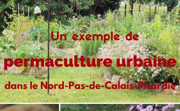 """Sortie de """"Un exemple de permaculture urbaine dans le Nord-Pas-de-Calais-Picardie"""""""
