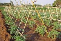 Sensec irrigation Sénégal et Afrique de l'ouest
