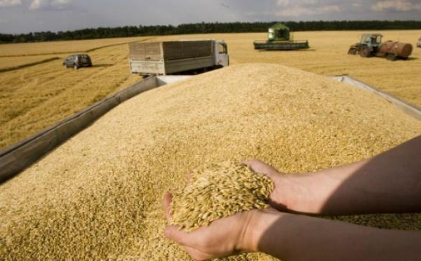 L'Algérie importe en urgence au moins 400.000 tonnes de blé dur