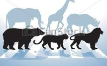 ANIMALI MINACCIATI