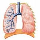 La respiration (niveau CM)